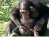 Žíznivá opička