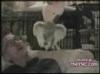 Obrázek k videu Tančící zvířata