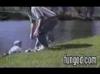 Obrázek k videu Rybaření