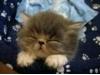 Unavené kotě