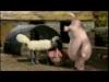 Ovečka Shaun - Česání jablek