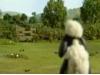 Ovečka Shaun - Přitažlivý pes