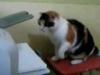 Kočka versus tiskárna